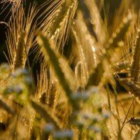 Сельхозорганизации могут получить право заключать договоры о целевом обучении